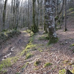 Aranzadi Zientzia Elkarteak Oiasso-Tarraco erromatar galtzada ikertuko du Ultzaman, auzolanean