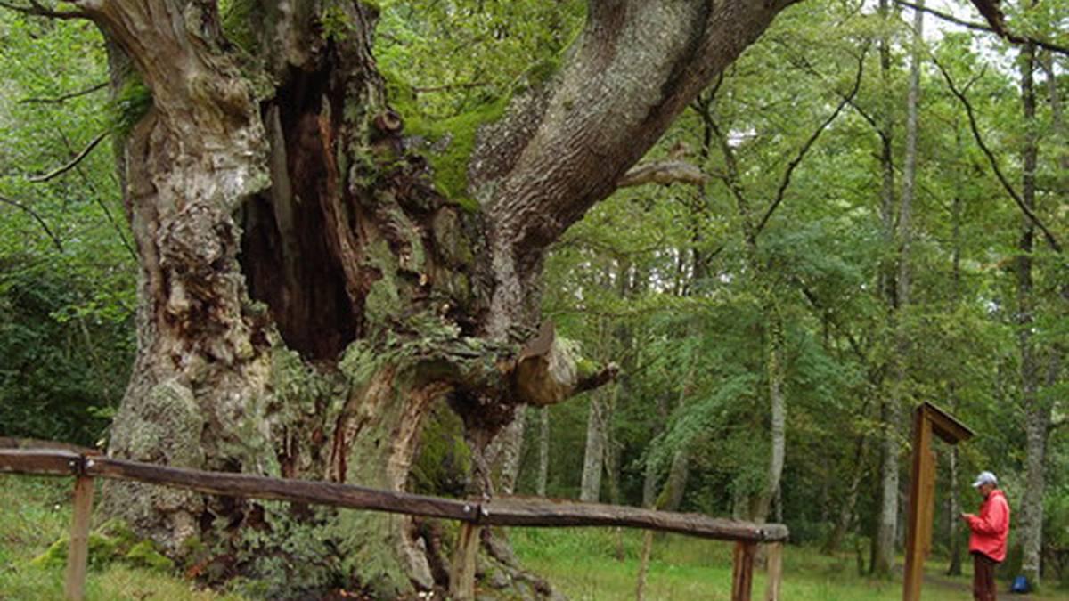 Naturguneen erabilera publikoa zaintzeko eta kudeatzeko dirulaguntzak emanen ditu Nafarroako Gobernuak